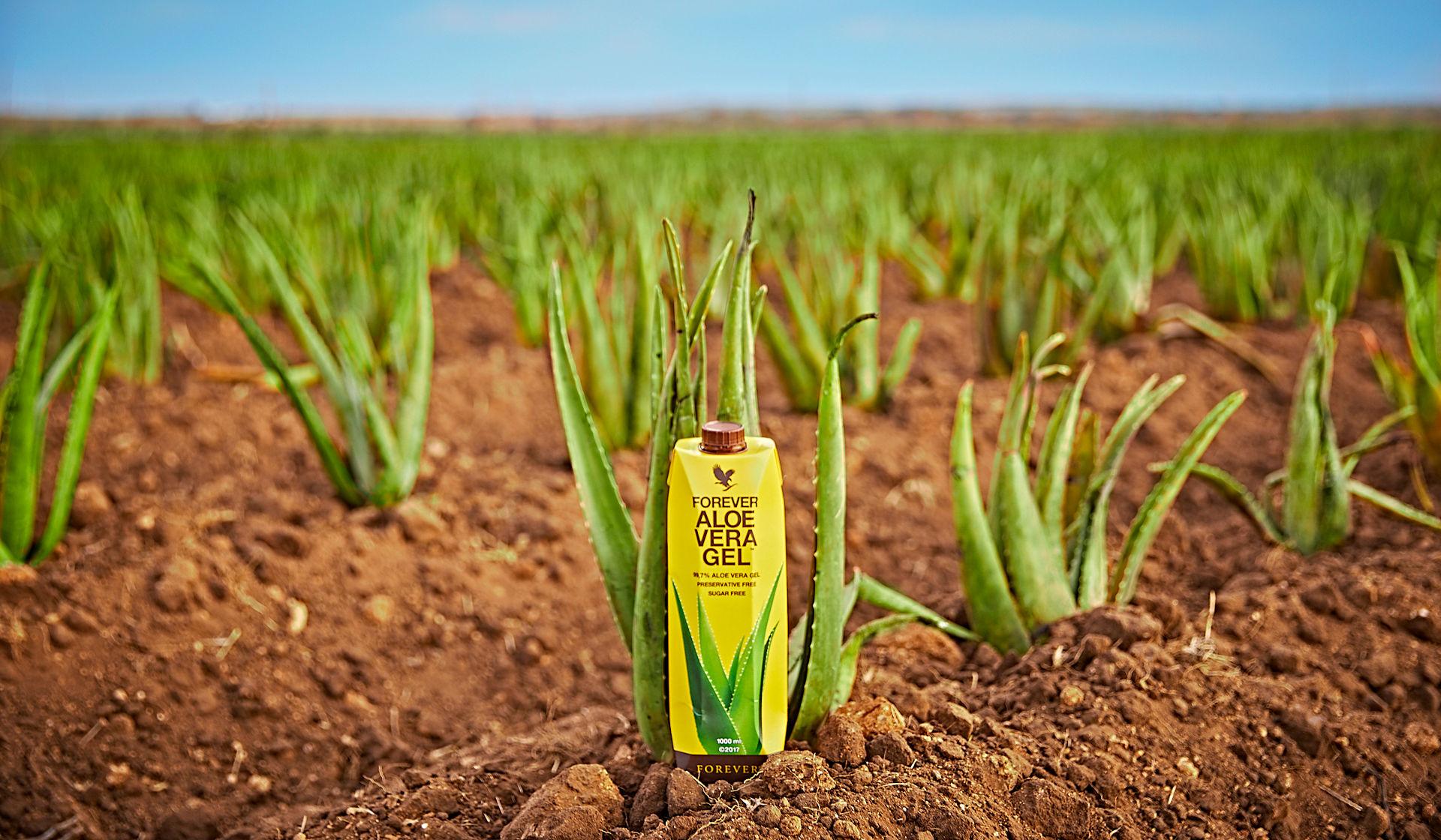 Aloe Vera Gel (Drinking Juice)